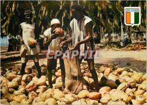 Modern Postcard Republic of Cote d'Ivoire Harvest of Palm Nuts