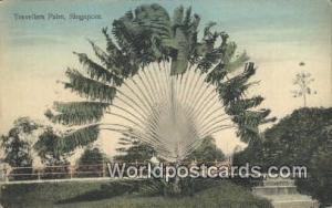 Singapore, Singapura Traveller Trees Traveller Trees