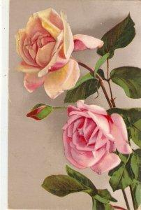 Beautiful roses  Nice vintage Swiss postcard