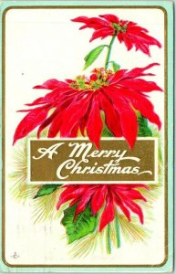 1912 A MERRY CHRISTMAS Embossed Greetings Postcard Poinsettias STECHER 228A