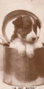 Dog In Hot Water Kettle Old German Real Photo Dogs Cigarette Card