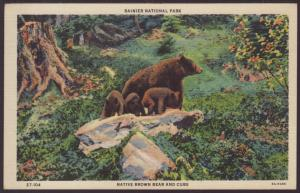 Brown Bear and Cubs,Rainer National Park Postcard