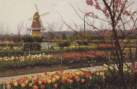 Louisiana Newellton Louisiana Dutch Gardens
