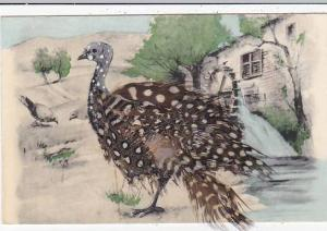 Turkey With Real Feathers