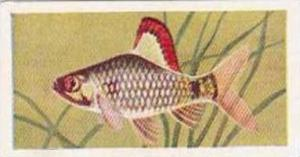 Mitchum Foods Vintage Trade Card Aquarium Fish 1957 2nd Series No 49 Ticto Barb