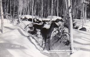 Michigan Watersmeet Northwoods Deer