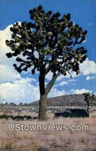 Giant Joshua Tree
