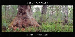 Large Size Panorama Postcard, Tree Top Walk, Western Australia 210x105mm #949