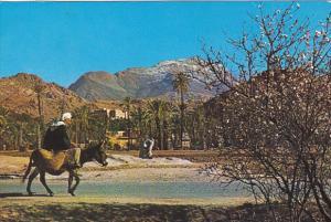 Morocco Sur La Route De Tafraout