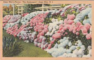 Hydrangea - Flowers at Cape May NJ, New Jersey - pm 1949 - Linen