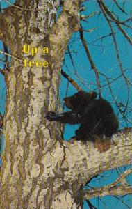 Black Bear Cub Up A Tree Another Fine Mess You Got Me Into
