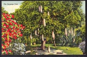 DOLLAR BOX – FL – The Sausage Tree