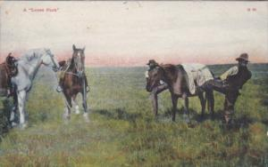 Cowboys With Horses A Loose Pack 1908