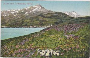 On the Trail to UNALASKA, Alaska, 1900-10s