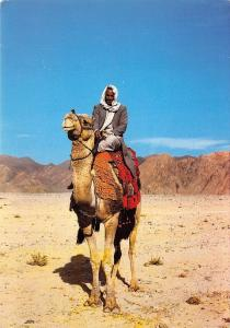 BR42718 The bedouin proudly rides high on his camel chameau camel palestine