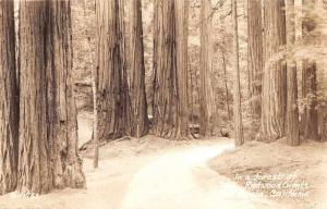 Big Basin California Redwood Forest Path Real Photo Antique Postcard J70257