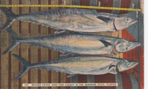 Record King Fish caught in Florida , 1930-40s