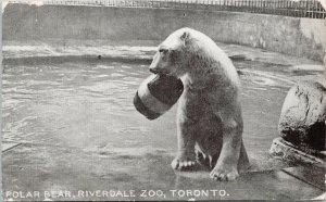 Polar Bear Riverdale Zoo Toronto ON Ontario c1911 for BM Woodward Postcard F42