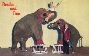 Performing Elephants Bertha and Tina At John Asuaga's Nugget Sparks East Reno...