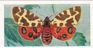 Swettenhams Tea Vintage Trade Card Butterflies & Moths 1958 No 24 Tiger Moth