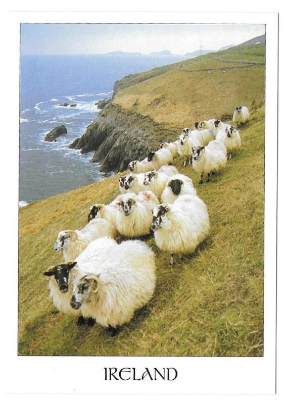 Ireland Sheep on Cliff Vintage John Hinde Postcard 4X6