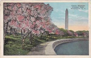 Washington D C Cherry Blossoms At Potomac Park