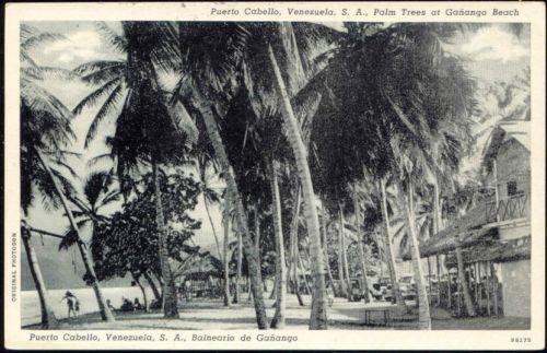 venezuela, PUERTO CABELLO, Palm Trees at Gañango Beach