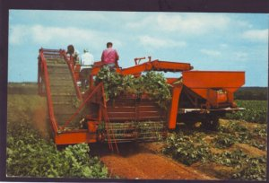 P1365 vintage unused postcard farmers harvest potatoes covehead p.e.i. canada