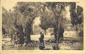 Garden of Gethroemane JerUSA lem, Israel Unused