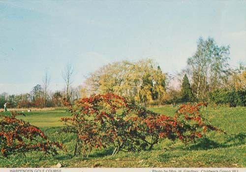 Golf Course Players Harpenden Hertfordshire Herts Womens Institute Postcard