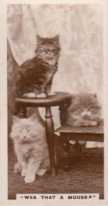 Was That A Mouse Cats Startled German Old Real Photo Cat Cigarette Card