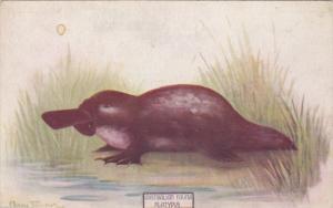 Australian Fauna , Platyous , 00-10s