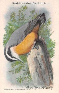 TC76 Arm & Hammer Red-Breasted Nuthatch Bird Series Baking Soda Trade Card