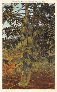 Pappaya Tree and Fruit Miami, Florida, USA Fruit Assorted Unused