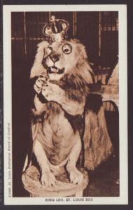 King Leo the Lion,St Louis Zoo,MO Postcard