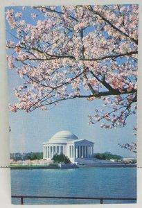 Jefferson Memorial Cherry Blossoms Washington DC Vintage Postcard