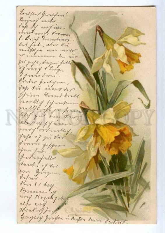 240681 Daffodil NARCISSUS by C. KLEIN vintage Meissner #1047