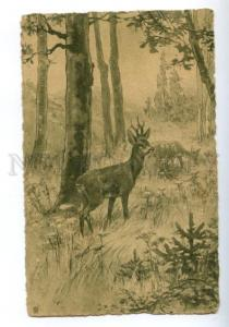 172695 HUNT Young DEER Forest Vintage ENGRAVING Russia PC