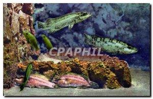 Postcard Modern Aquarium Monaco Cliche Property exclusive Barba Oceanographic...