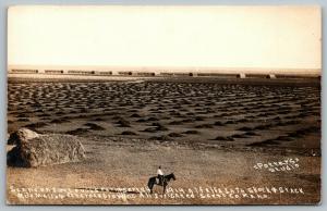 Scott City KS~Alfalfa Stacks Galore~Lough Ranch Irrigation System~RPPC c1912 PC