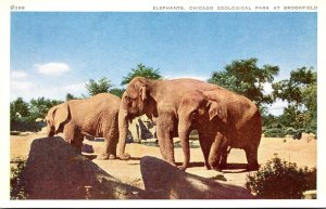 Illinois Chicago Zoological Park At Brookfield Elephants