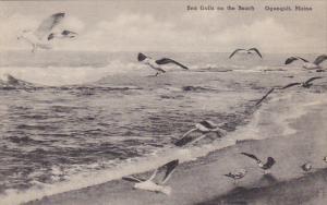 Sea Gulls On The Beach Ogunquit Maine Albertype