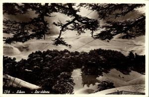 lebanon, Les Cèdres du Liban, Cedrus Cedar (1950s) RPPC Postcard (1)