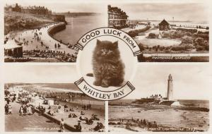 RP: WHITLEY BAY, England, PU-1935; 4-view postcard , Black Cat , LIGHTHOUSE