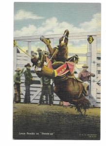 Rodeo Cowboy Louis Brooks Riding Heads Up Bucking Horse