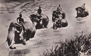 Elephants Fording A River Ceylon Sri Lanka Real Photo