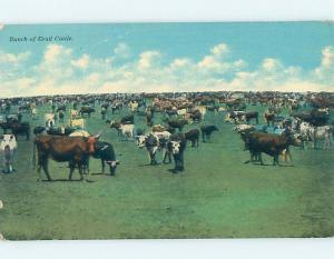 Pre-Linen western LARGE GROUP OF TRAIL CATTLE COWS GRAZING HJ4817
