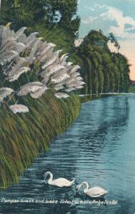 Pampas Grass and Swans - Echo Park - Los Angeles CA, California - DB