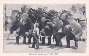 Elephants Elephant Training St Louis Zoo