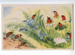 240224 Life of Insect ladybird Orchestra by BAUMGARTEN vintage